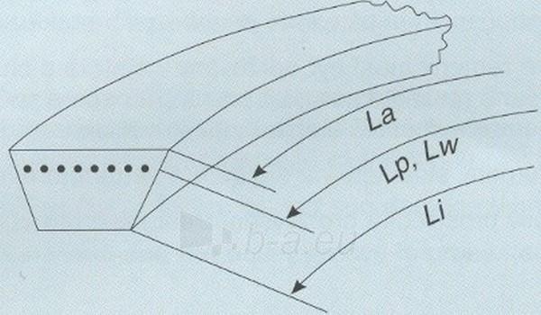 Trap.dirželis Z 1250Lw/1230Li Dynaflex Paveikslėlis 1 iš 1 223021010042
