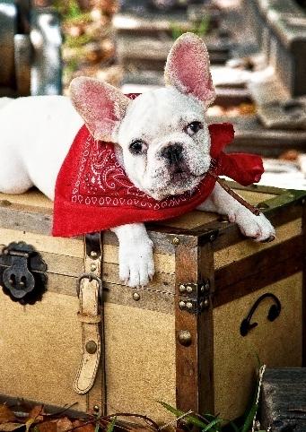TREFL 37154 Puzzle Šuniukas ant lagamino 500 det. Paveikslėlis 1 iš 2 250710100125