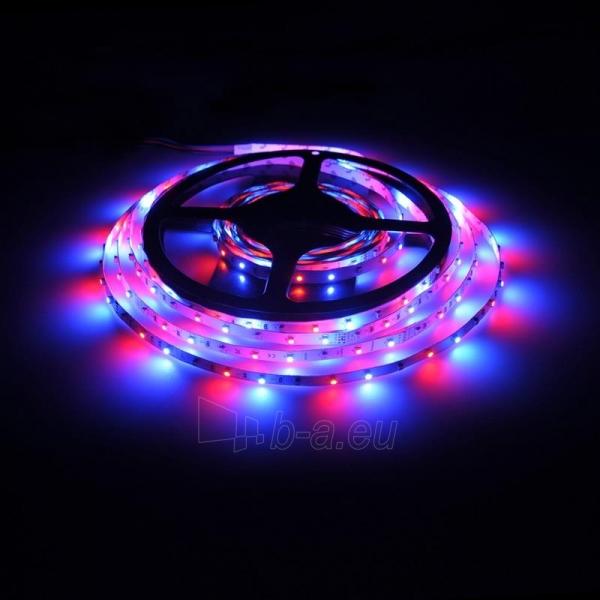 Whitenergy LED juosta 5m | 3528 | 4.8W/m | 12V DC | RGB Paveikslėlis 6 iš 10 310820049442