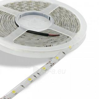 Whitenergy LED juosta atspari vandeniui 5m | 30vnt/m| 5050| 7.2W/m| šilta balta Paveikslėlis 1 iš 4 310820049433